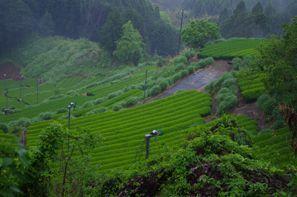 Makinohara (Shizuoka)