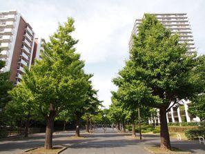 Nerima-ku (Tokyo)
