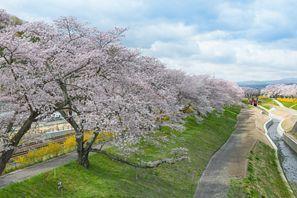 Shichinohe (Aomori)